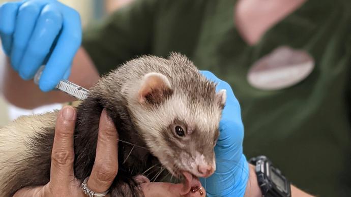早安·世界|美国一动物园为多种动物接种新冠疫苗