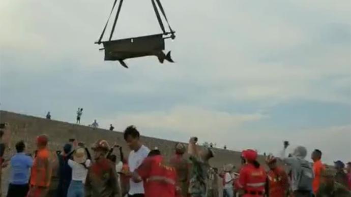 浙江台州搁浅存活的瓜头鲸已被安全放归海洋
