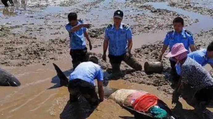 6天16头鲸鱼搁浅之谜:为何去浙江?声呐为何不好用了?