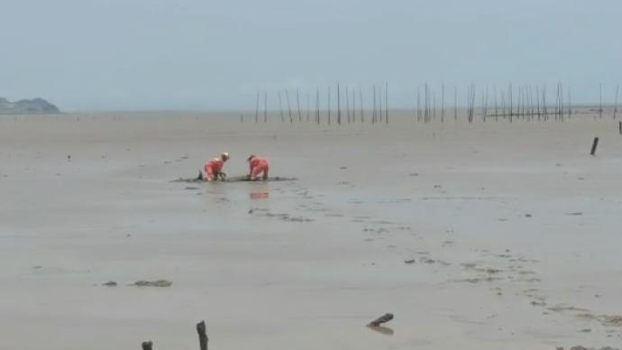 浙江台州又有两头疑似鲸类海洋生物搁浅,多部门正救援