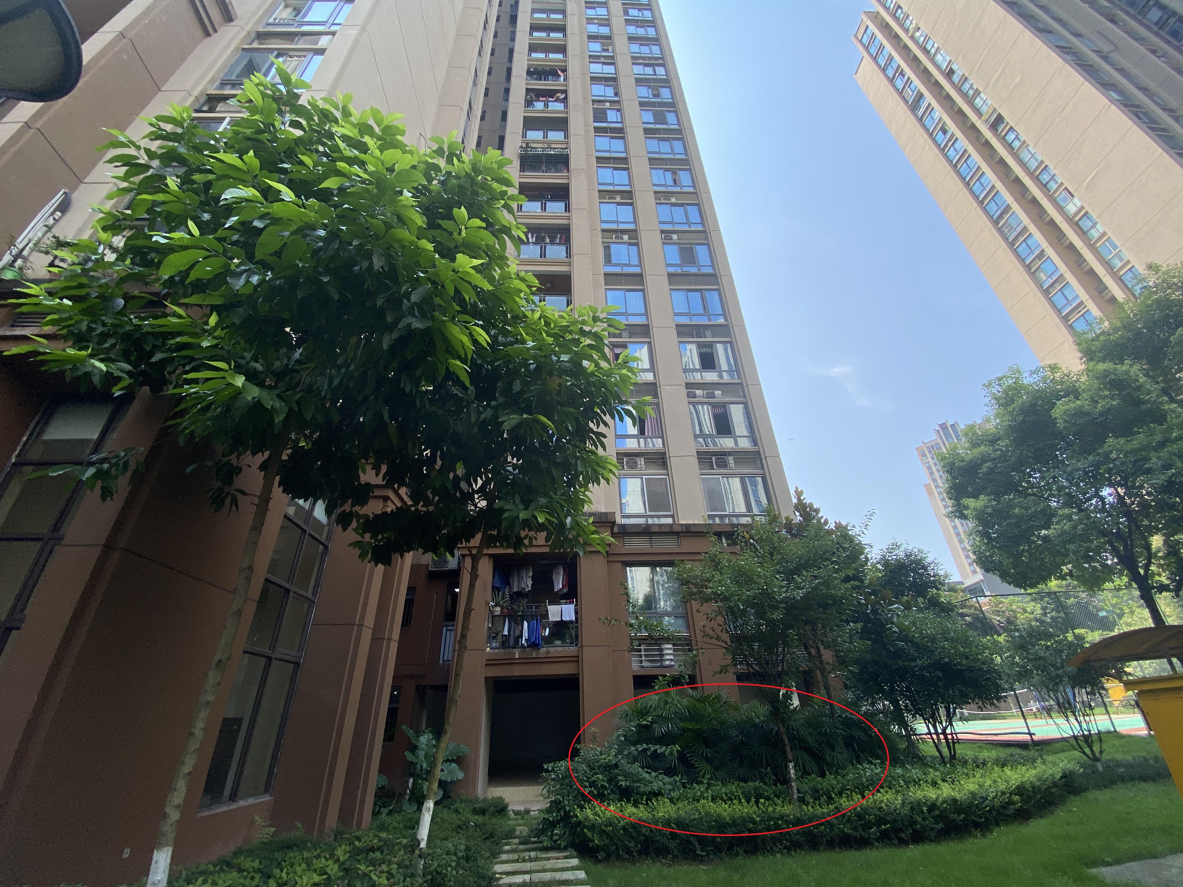 2020年11月2日,2名幼童从重庆南岸区锦江华府4栋15楼坠下(红圈处),检方指控孩子父亲涉嫌故意杀人。 澎湃新闻记者 谢寅宗 图