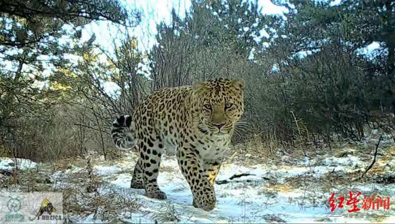山西国内最重要金钱豹栖息地之一。 猫盟CFCA 供图