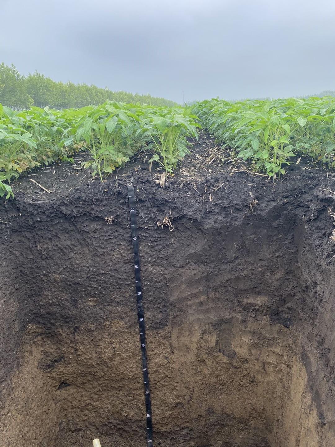 位于海伦市前进镇六合村的中国科学院黑土粮仓科技会战核心示范区,经过秸秆深混还田肥沃耕层构建,耕作层厚度已经增加至35厘米。