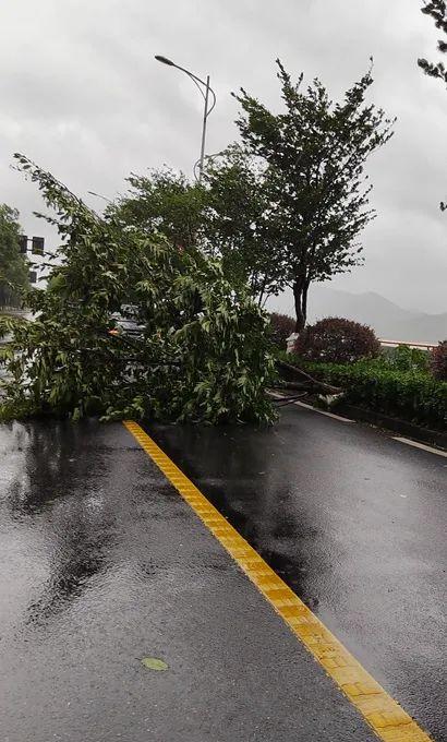 今晨,杭州闻涛路上有树木倒伏。 微博@浙江天气 图