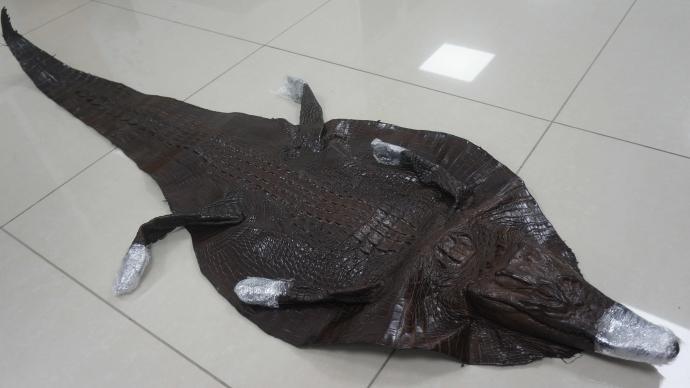 上海邮局海关查获濒危暹罗鳄鱼整皮1张,已依法扣留