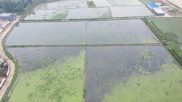 河南多地农作物严重受灾,中国农科院64名专家紧急援助