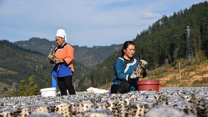 一手調研|偏遠山區的鄉村振興應充分考慮農民生計與養老問題
