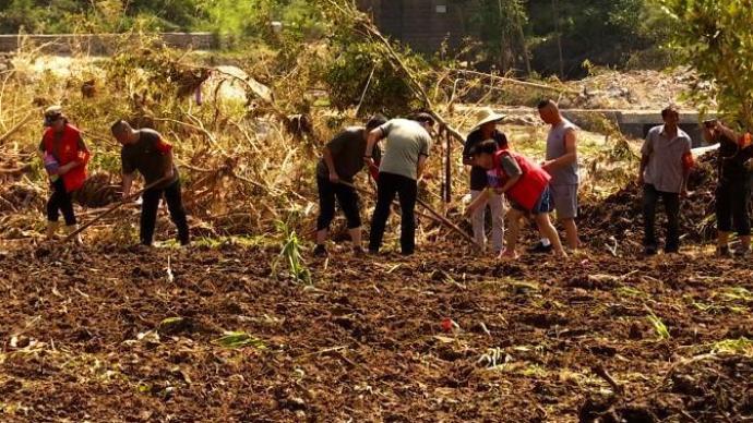 每畝補助50元,河南正全力開展因災絕收地塊改種補種