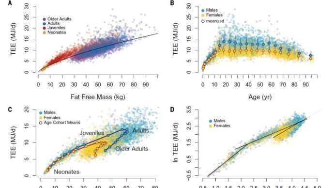 代謝分水嶺真的在中年?中外團隊首次揭示全生命周期代謝規律