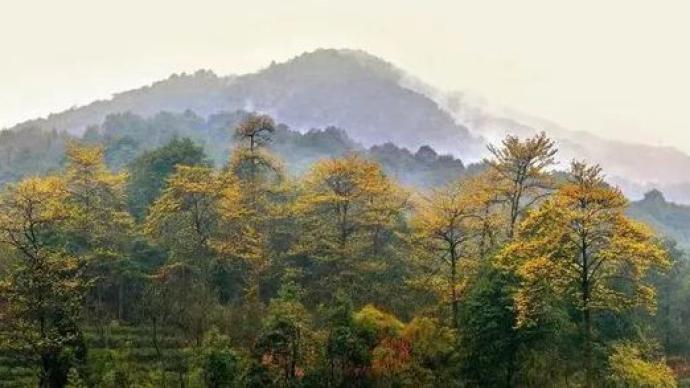 乡村振兴田野调研①山:一个国家森林公园的财政账本