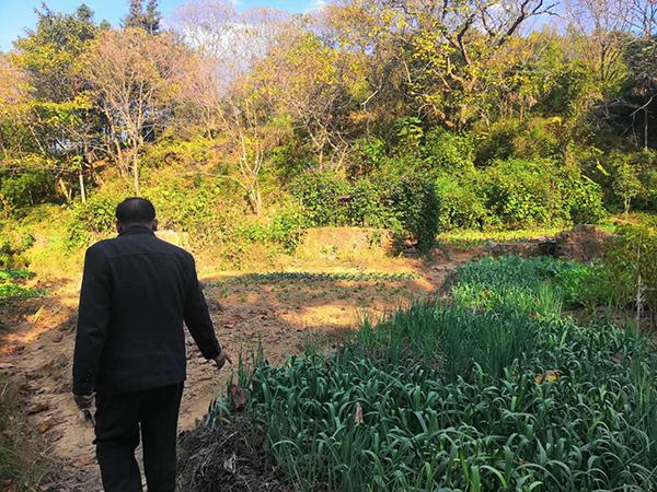 2019年11月24日,曾观慈再次来到发现儿子遗体的地方:两百多年前的老屋已变成了一块块的菜地。