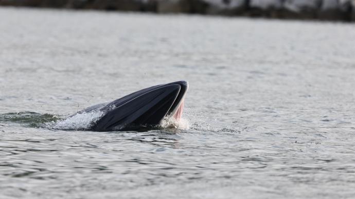 孤鲸环游记