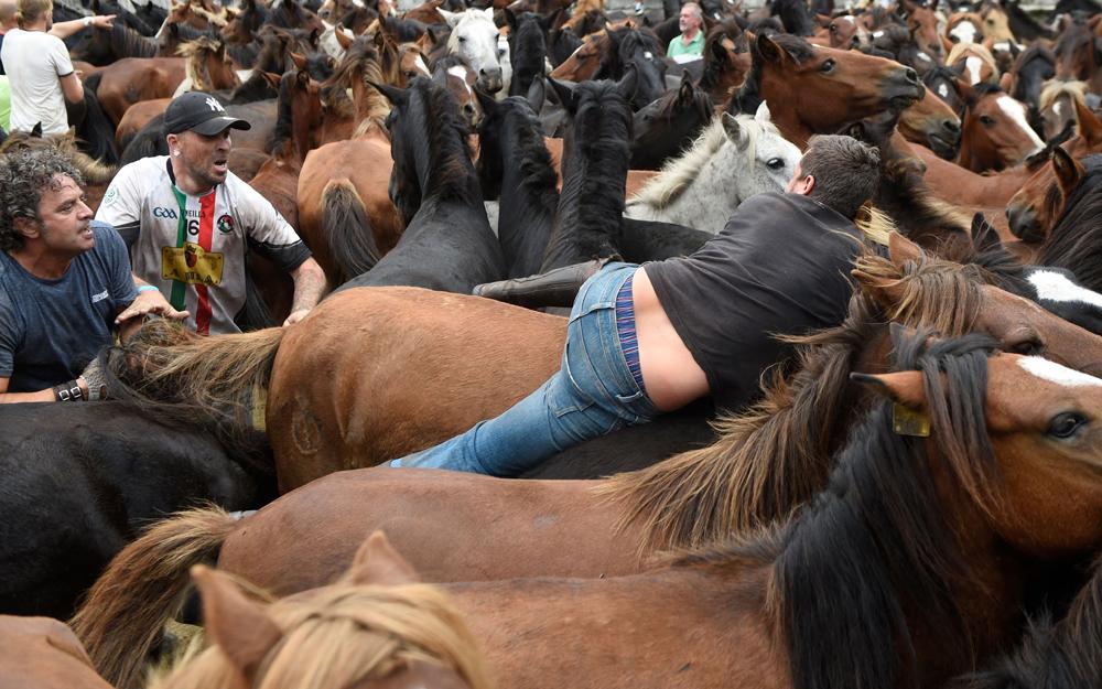 """當地時間2021年8月29日,西班牙薩布西多,當地舉辦""""野馬剪毛""""節,人們會從山上將野馬趕下來,給它們做記號并修剪鬃毛。"""