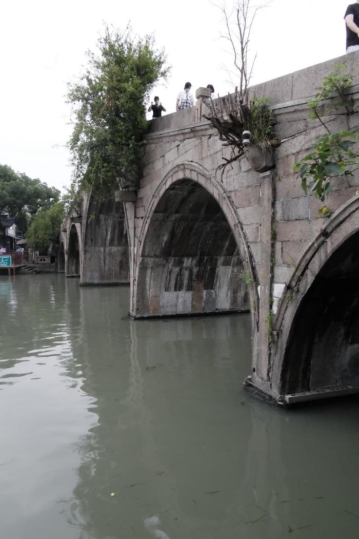 自然生長在放生橋橋縫里的石榴樹