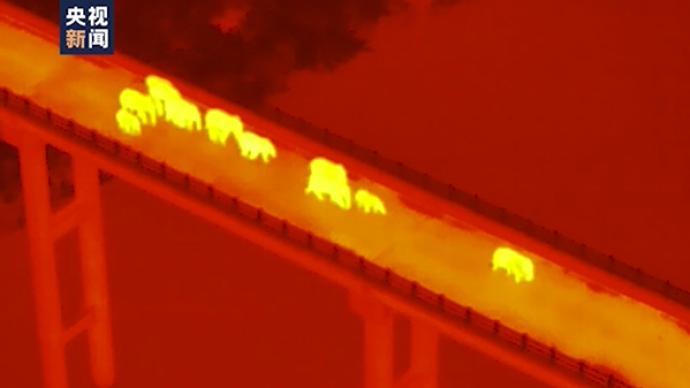 視頻丨離原棲息地越來越近了!南返亞洲象群跨過阿墨江