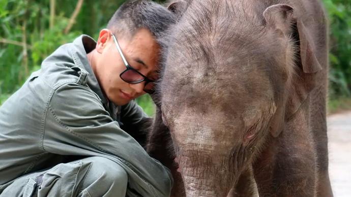 """被遗弃的新生小象与""""象爸爸""""的生活"""