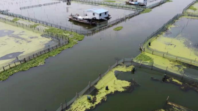 陽澄湖大閘蟹9月22日開捕上市,或將錯過中秋宴席