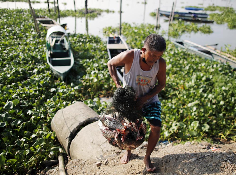 當地時間2021年9月3日,菲律賓馬尼拉大都會,一名漁民在菲律賓第一大湖——貝湖岸邊卸貨。
