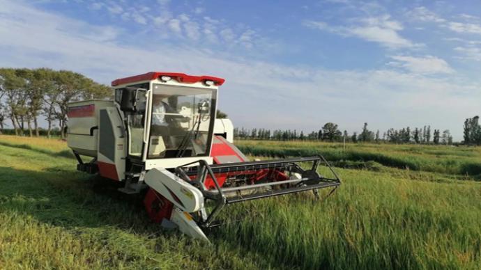 中国农科院草原所研制羊草种子收获新装备,损失低于5.3%