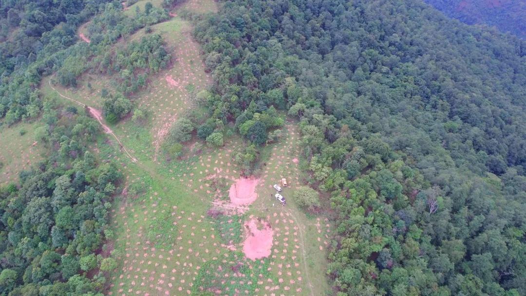 位于勐旺乡的亚洲象食物源基地