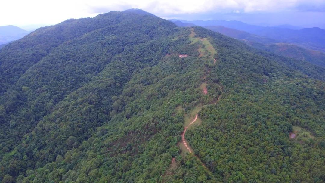 郁郁葱葱的森林,是亚洲象栖息的家园