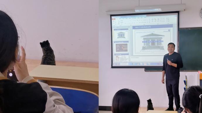 """小猫闯入教室认真""""听课"""",学生:都认识它,老师没赶它走"""