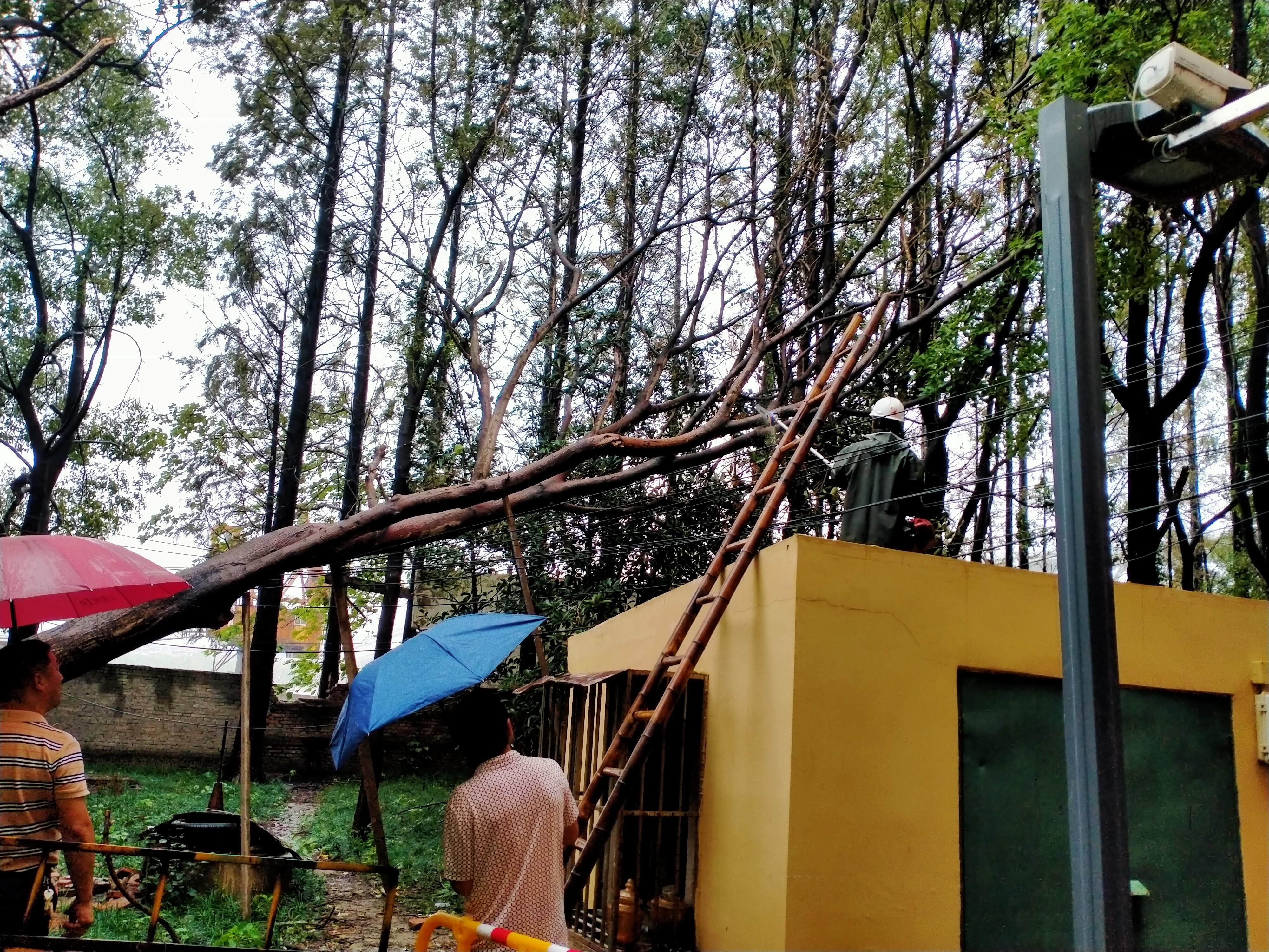 工作人员处置倒伏树木。奉贤区供图