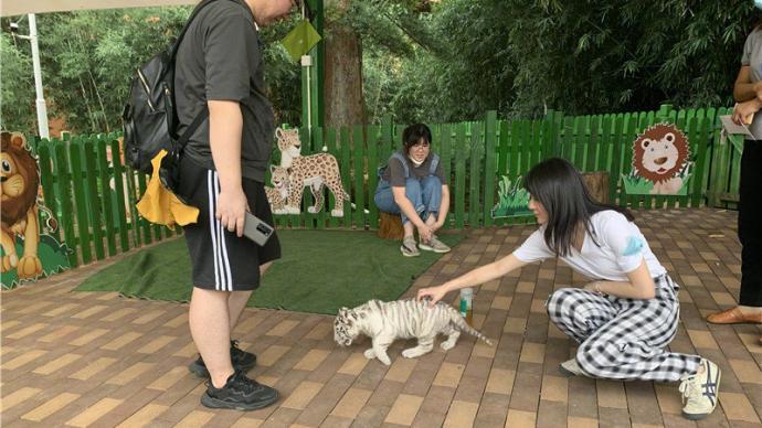 花50元就能摸白虎幼崽,長興太湖龍之夢動物世界被責令整改
