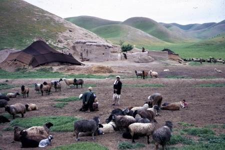 林迪斯法恩70年代在阿富汗做田野研究时的照片