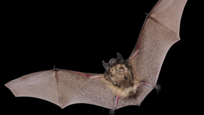 《科学》:类SARS病毒每年从动物传染人类可能达数十万次