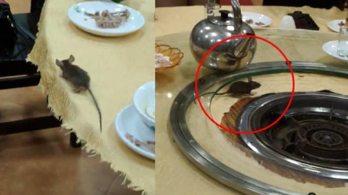 佛山一餐厅老鼠上桌乱窜,顾客:有老鼠很正常,彼此理解一下