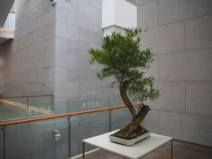 连廊间不时点缀与建筑融为一体的绿植藤蔓,假山片石显得生机盎然。