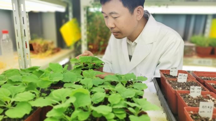 如何让水稻更好吸收营养?这项研究成果揭示菌根共生调节机制