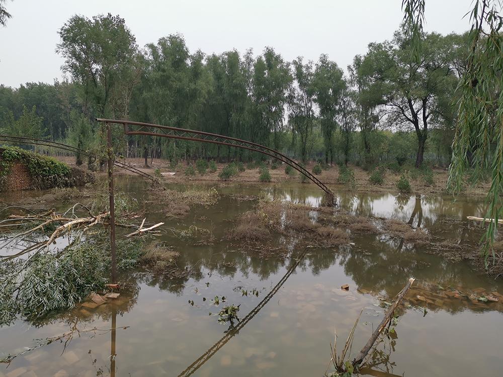 桑柳树村村民们反映的破坏防洪堤的猪场,已被洪水冲毁。
