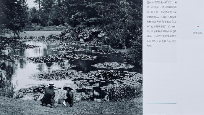 摄影好书|《邱园的故事》探寻英国国家植物园建造之初的记忆