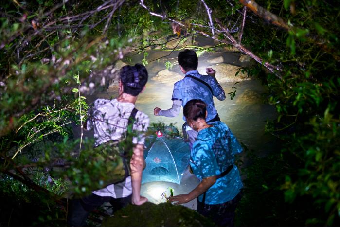 2021年9月,张家界国家森林公园,蒋万胜的学生在夜间布下渔网等待大鲵。