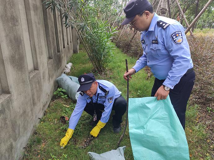 上海路边绿化带现1.5米大蛇:系国家一级保护动物花纹蟒
