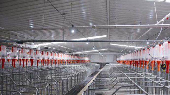国家统计局:生猪市场调控机制在不断完善,利于生猪生产稳定
