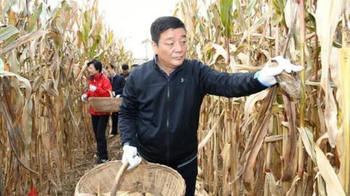 书记市长领队进玉米地,陕西咸阳万名党员干部助农抢收抢种