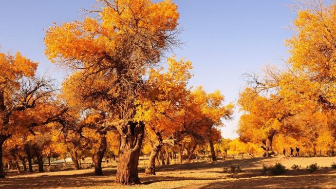 内蒙古额济纳旗旅游协会为滞留游客赠送门票:三年内可免费游