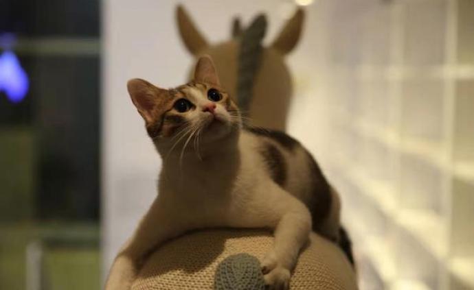 看展擼貓,詩歌來到云平臺,上海民生現代美術館重開