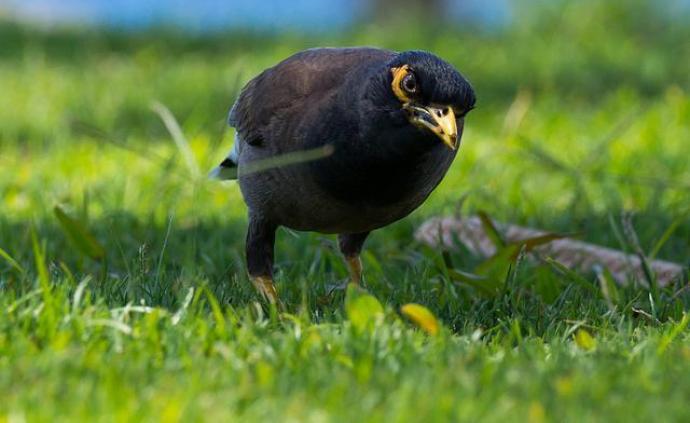 凡是沒有列入畜禽遺傳目錄的野生動物,一律禁止食用