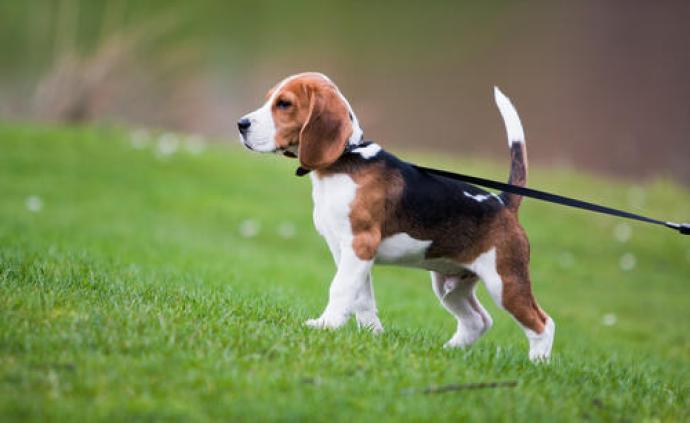 香港渔护署检测发现狗对新冠肺炎测试呈弱阳性反应