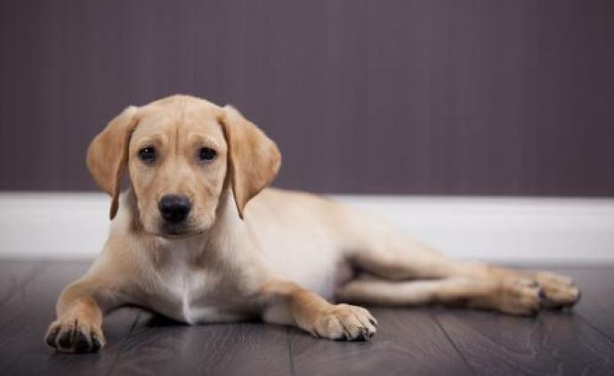 香港食物及卫生局长:无证据显示狗会传播新冠病毒给人