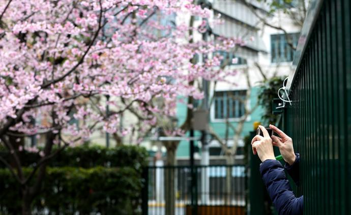 云赏花:3月上海,关不住的春天