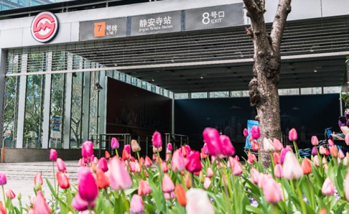 掌心上的郁金香花展:上海街头,春天勇敢盛开