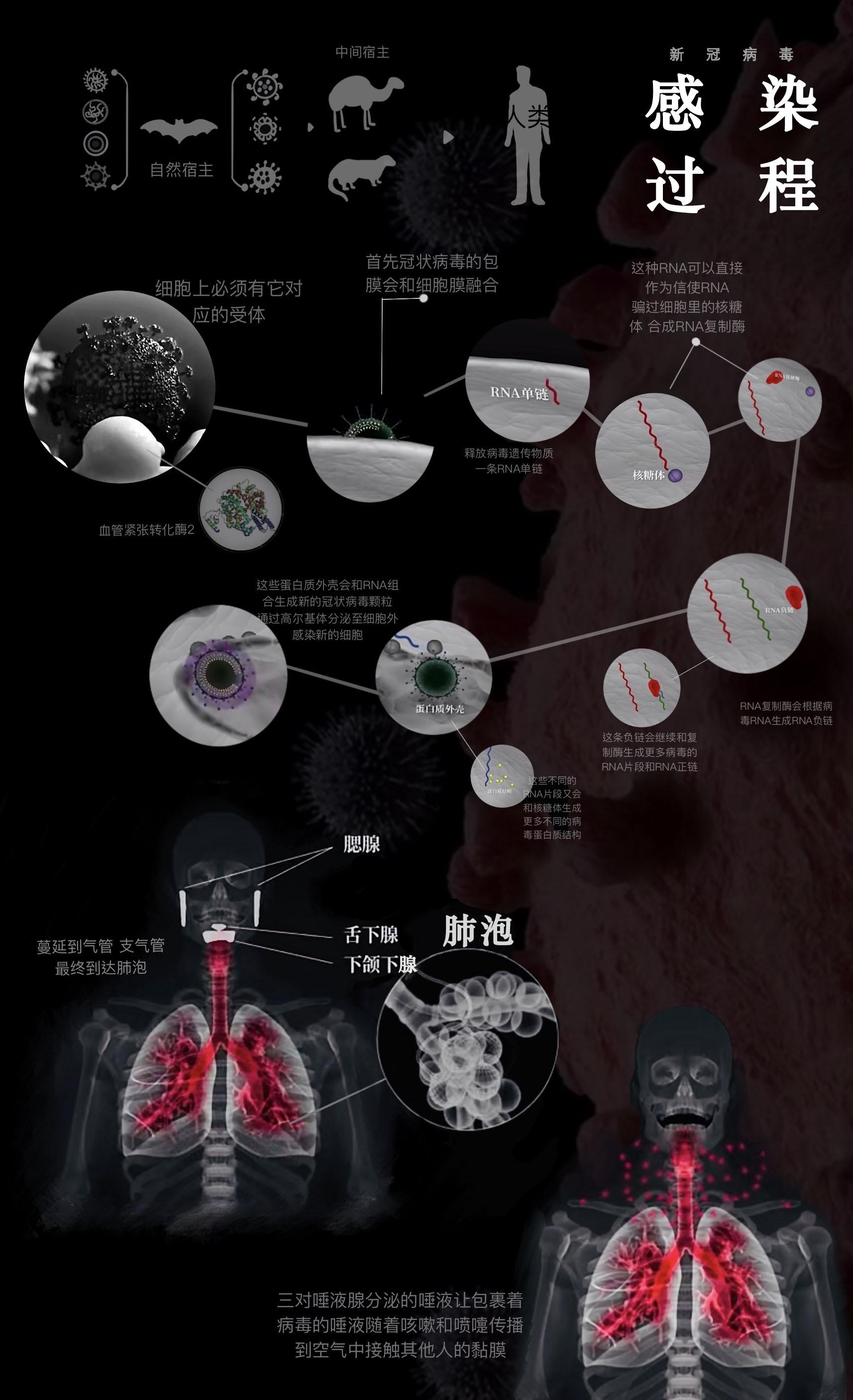 新冠病毒感染过程+口罩基本介绍(设计者:蔡元新、宋志勤)部分素材源自回形针视频