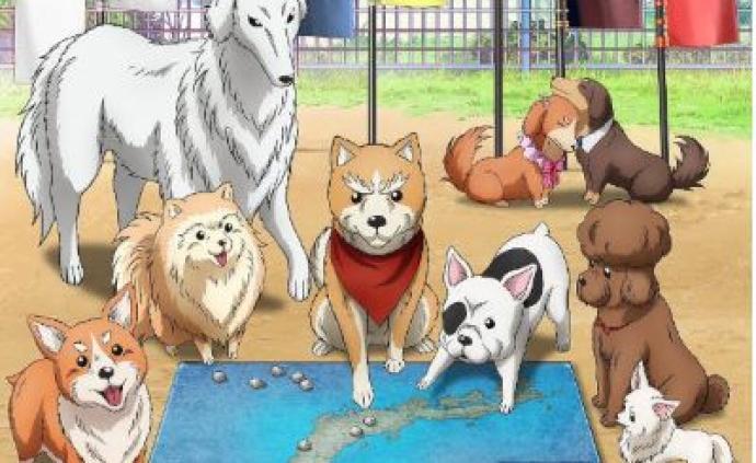 當織田信長轉世成為一條名叫肉桂的柴犬