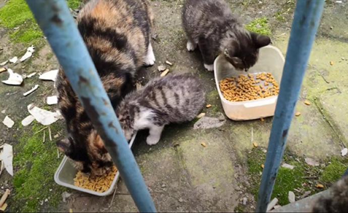 武汉小事丨小区封锁后,武汉小伙和20只流浪猫的38天