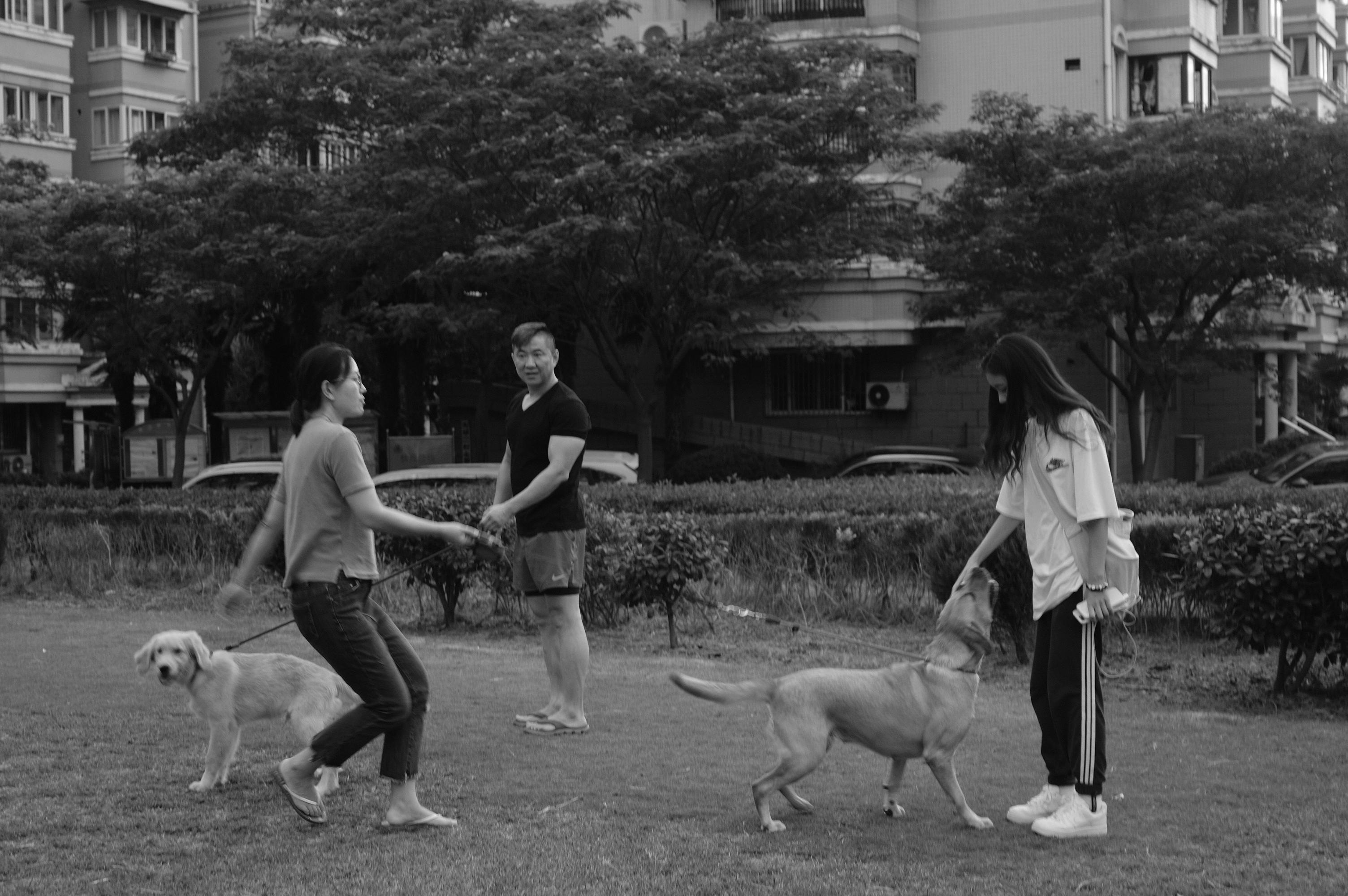 草坪上遛狗的人们。本文图片均为南音 图